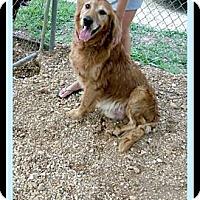 Adopt A Pet :: Big Red - Denver, CO