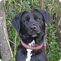 Adopt A Pet :: Lexie - Mocksville, NC
