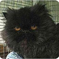 Adopt A Pet :: Mercedes - Davis, CA