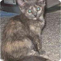 Adopt A Pet :: Kiwi - Davis, CA