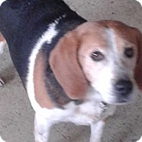 Adopt A Pet :: JJ in CT- SENIOR - West Hartford, CT