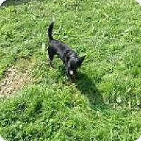 Adopt A Pet :: Paco - Kendall, NY