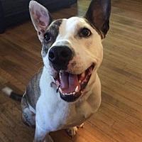 Adopt A Pet :: Maxine - Buffalo, NY
