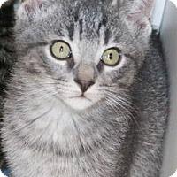 Adopt A Pet :: Lucas McCain - Ann Arbor, MI
