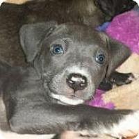 Adopt A Pet :: Bronx - Marlton, NJ