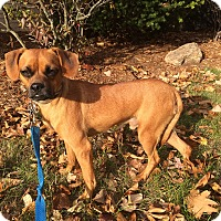 Adopt A Pet :: Pluto IN CT - Manchester, CT