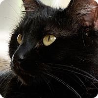 Adopt A Pet :: Milo - Brockton, MA