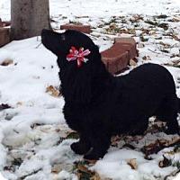 Adopt A Pet :: Jasmin - Wheatland, WY