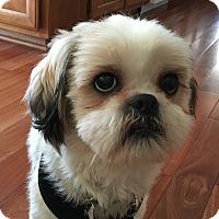 Adopt A Pet :: Peanut - Buena Park, CA