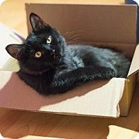 Adopt A Pet :: Sammy - Laval, QC