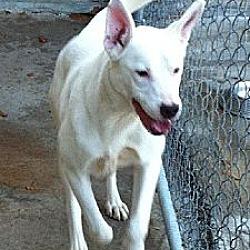 Photo 2 - Labrador Retriever Mix Dog for adoption in Manning, South Carolina - Andrea