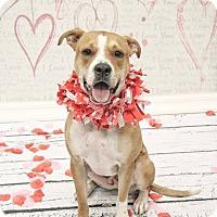 Adopt A Pet :: Atticus - Adoption Pending - West Allis, WI