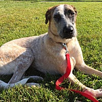 Adopt A Pet :: Lindsey - hollywood, FL