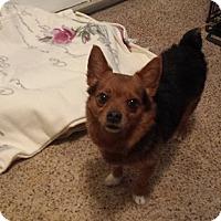 Adopt A Pet :: Chalmers - Eastpointe, MI