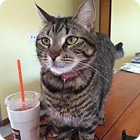 Adopt A Pet :: Cooper - Acushnet, MA