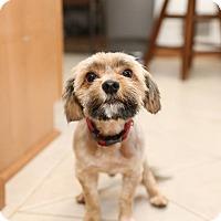 Adopt A Pet :: Elroy - Troy, MI