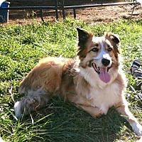 Adopt A Pet :: Skye - New Oxford, PA