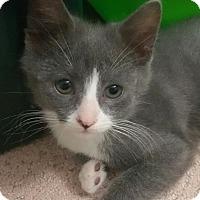 Adopt A Pet :: Dalton - Yorba Linda, CA