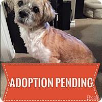 Adopt A Pet :: Porkchop - Regina, SK