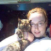 Adopt A Pet :: Lovie - Benton, PA