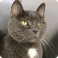 Adopt A Pet :: Rocky 34459786 - Westampton, NJ