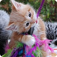 Adopt A Pet :: Motzart - Palmdale, CA