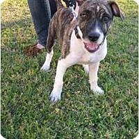 Adopt A Pet :: Courtesy Listing - Killen, AL