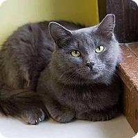 Adopt A Pet :: Mava - Lancaster, MA