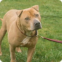 Adopt A Pet :: Sugarbear - Tillamook, OR