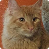 Adopt A Pet :: Byram - Ennis, TX
