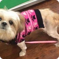 Adopt A Pet :: Rosalinda - Oak Ridge, NJ