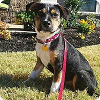Adopt A Pet :: Joe - Phoenxville, PA