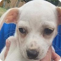 Adopt A Pet :: Teeny - Aurora, CO
