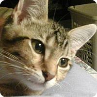 Adopt A Pet :: Padmae - Springdale, AR