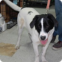Adopt A Pet :: Buddy - Brooklyn, NY