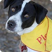 Adopt A Pet :: Lisa II - Tampa, FL