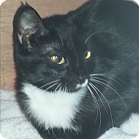 Adopt A Pet :: Stella - Waxhaw, NC