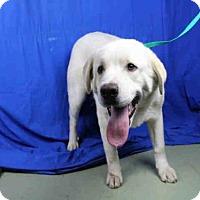 Adopt A Pet :: A023493 - Norman, OK