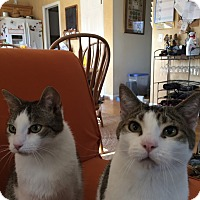 Adopt A Pet :: Fred & Ron - Davison, MI