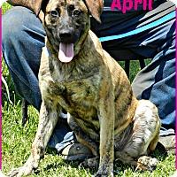 Adopt A Pet :: April - Lawrenceburg, TN