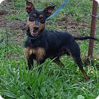 Adopt A Pet :: Yipee - Bedminster, NJ