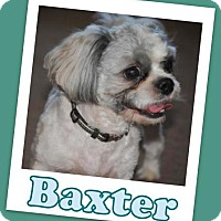 Adopt A Pet :: Baxter - Pataskala, OH