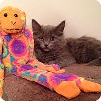 Adopt A Pet :: Slate - Woodstock, ON