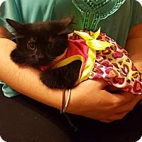 Adopt A Pet :: Leena - Irwin, PA