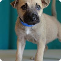 Adopt A Pet :: Tito - Waldorf, MD