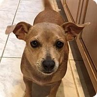 Adopt A Pet :: Dove - San Diego, CA