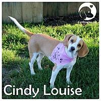 Adopt A Pet :: Cindy Louise - Novi, MI