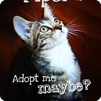 Adopt A Pet :: Piper - Jacksonville, FL