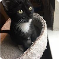 Adopt A Pet :: Twinkle - El Dorado Hills, CA