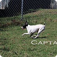 Adopt A Pet :: Captain - Texarkana, AR